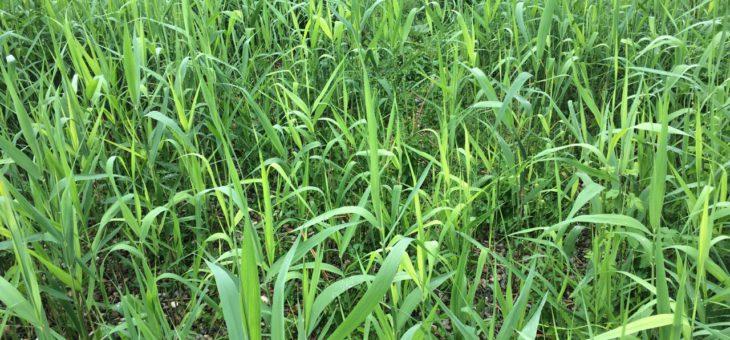 Ecofyt Zelfbouw Helofytenfilters